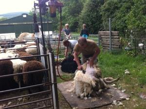 Shearing2015